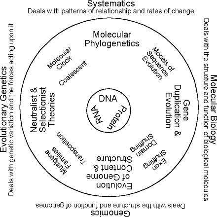 Any-Side-Up Diagram of Molecular Evolution