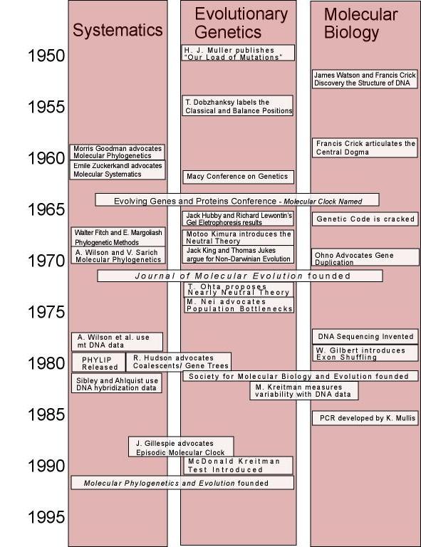the general timeline for the evolution A general timeline of hominid evolution based on paleoanthropological fossil evidence pinterest 인류의 진화, 과학 교실 이외에도 더 많은 것을.
